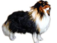 COLLIE WITH HAIR