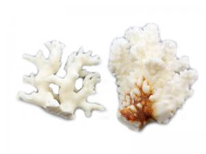 CORAL PIECES ASSORTMENT